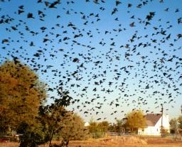 USA und Schweden: Tote Vögel fallen vom Himmel ...